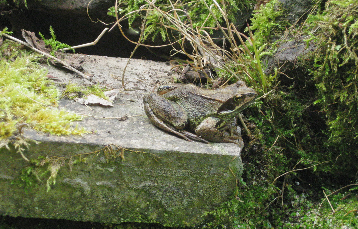 frogbuddy