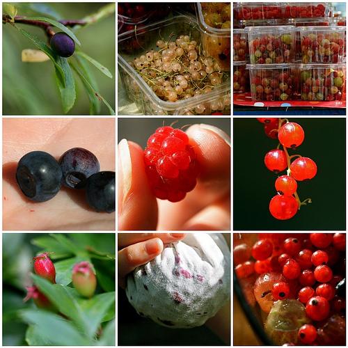 fruitmos