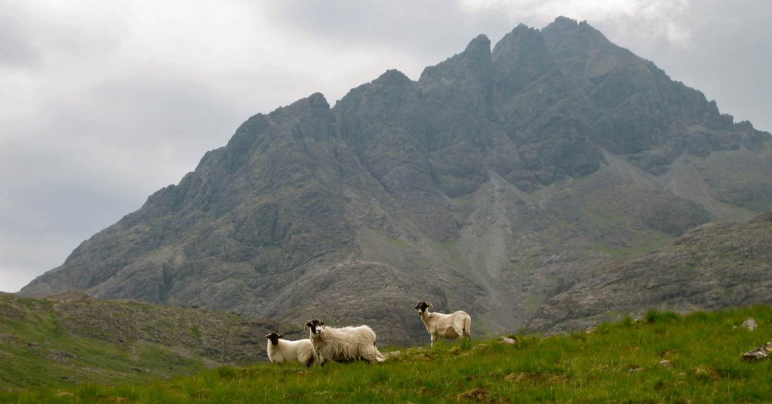 sheepandridge