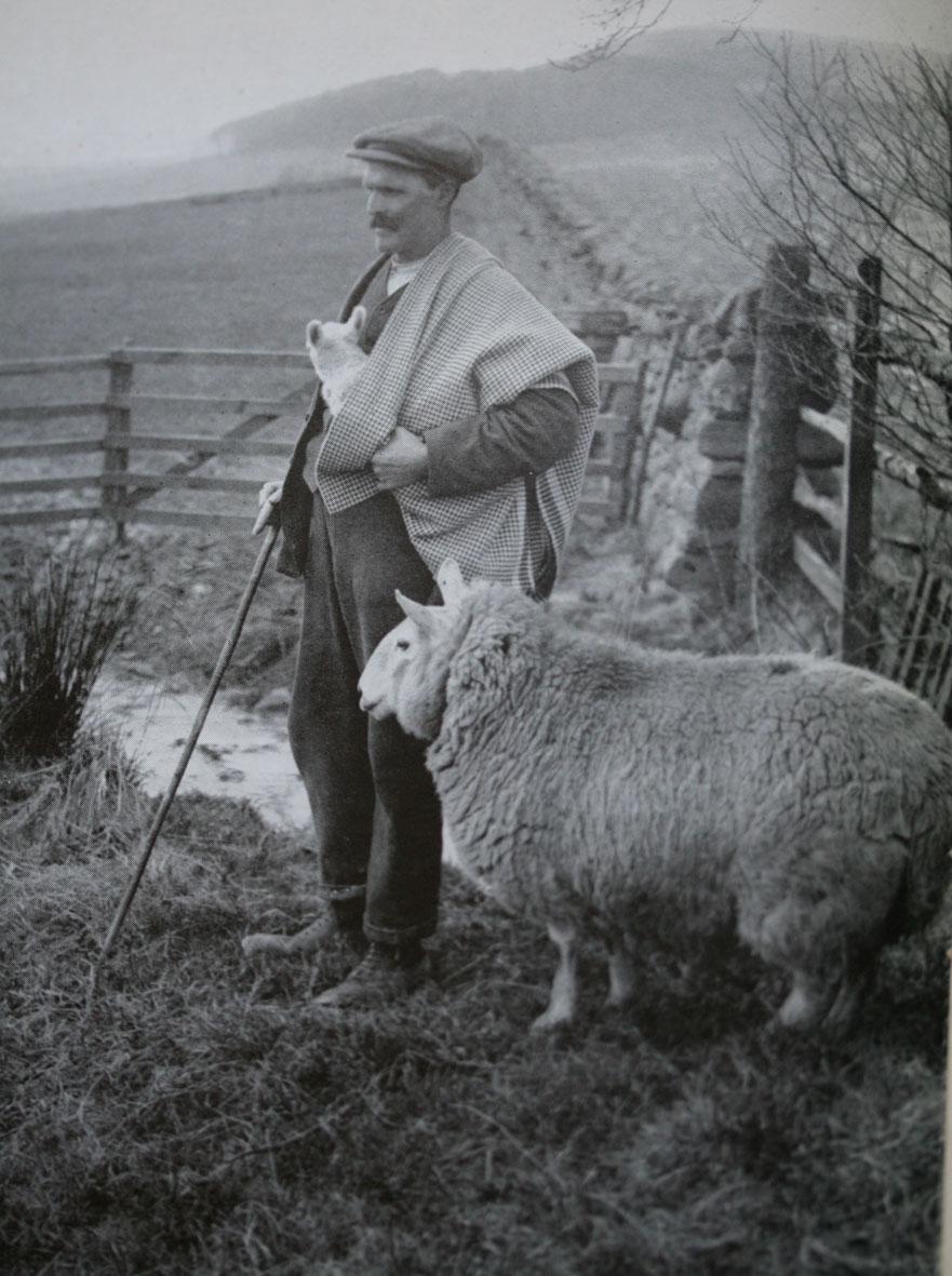 shepherdsplaid