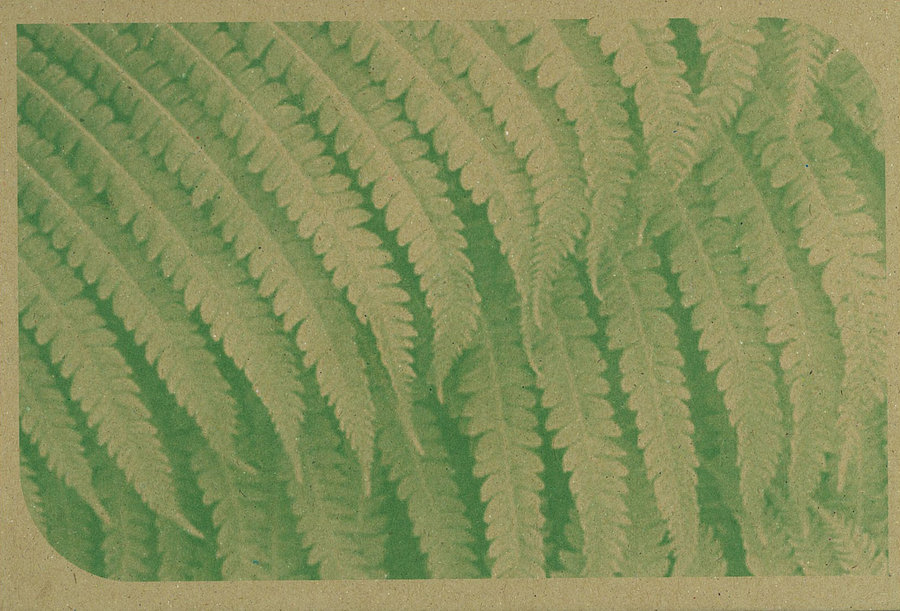 recycled_fern_motif_cardboard_by_ascendingstars-d4hq6xa