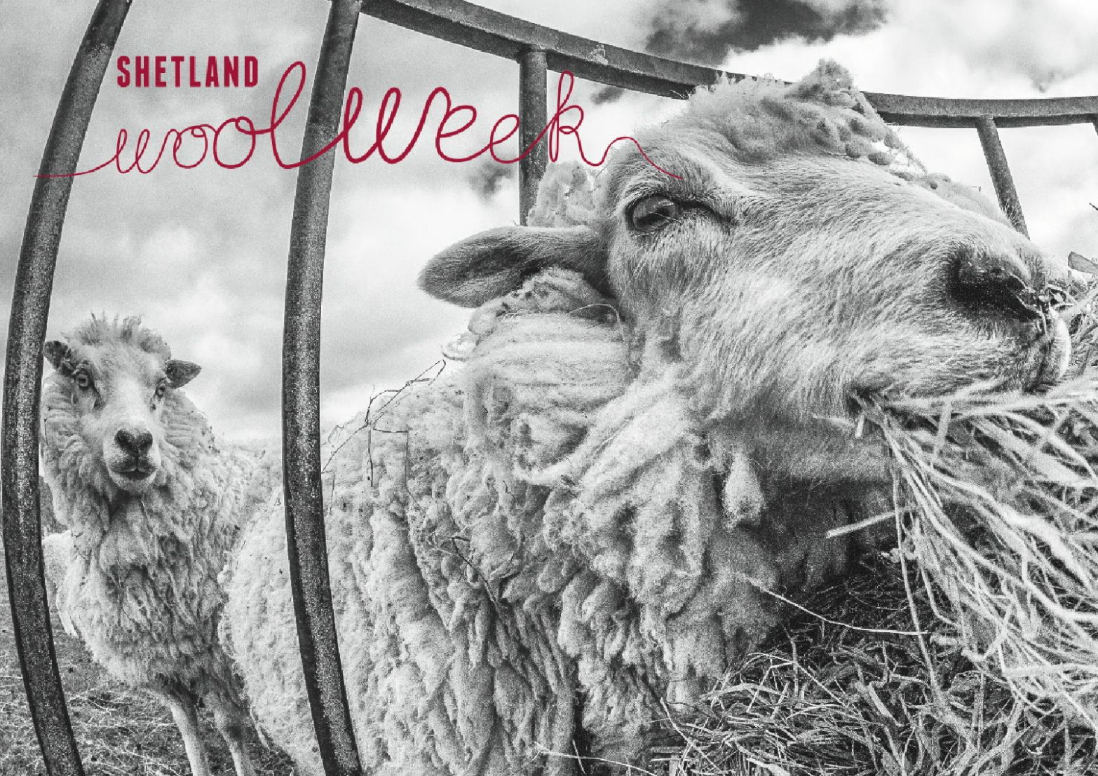 shetland-wool-week-image
