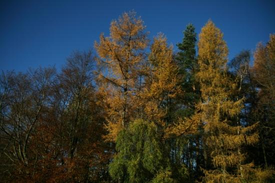blueandgold