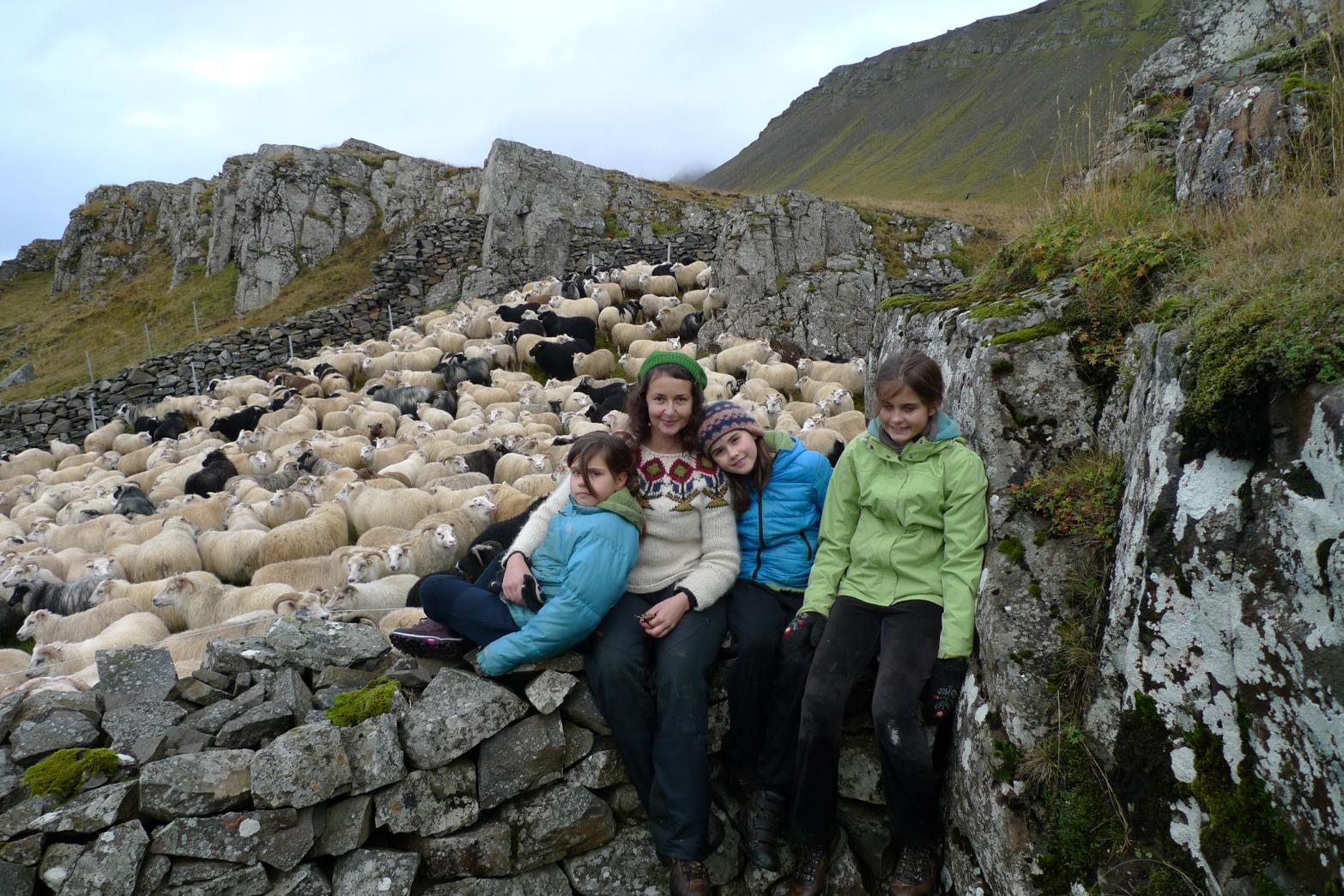 sheep_rpund-Up_my_family