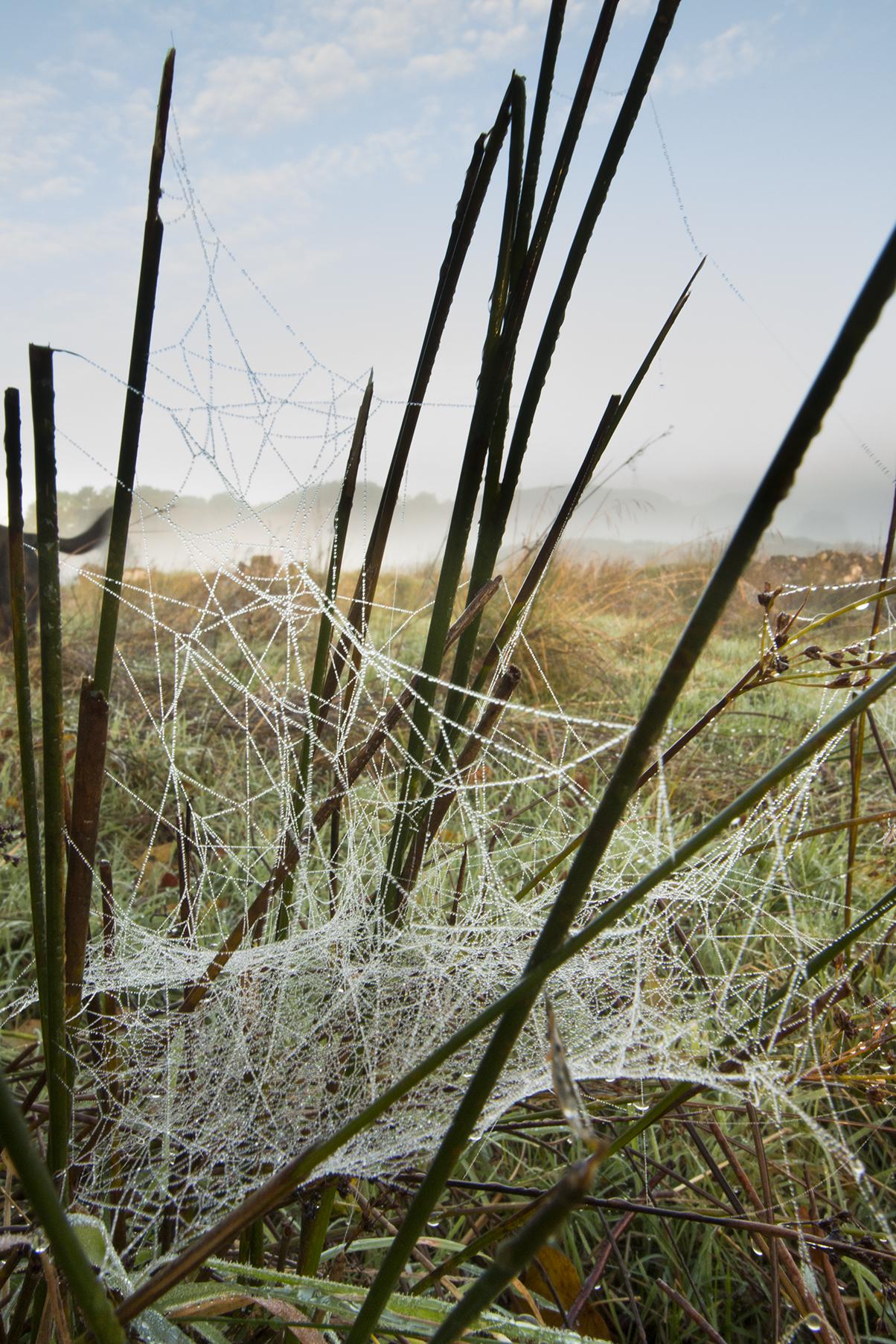 mistywebs-copy