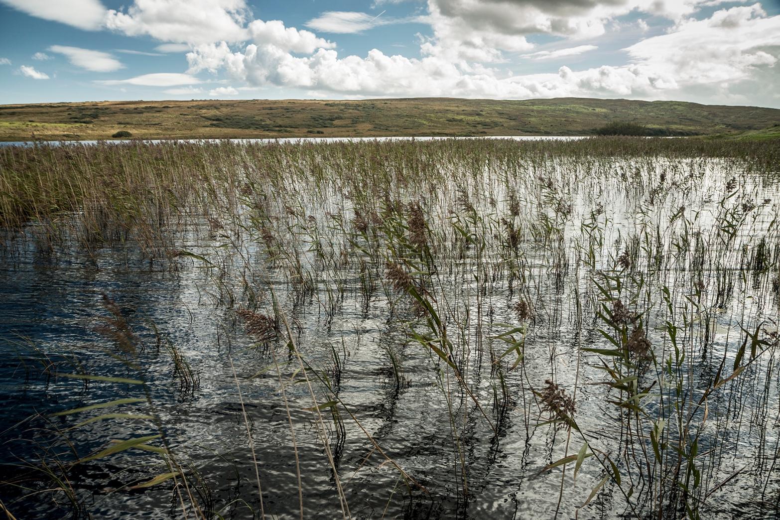 finlaggan-reeds-copy