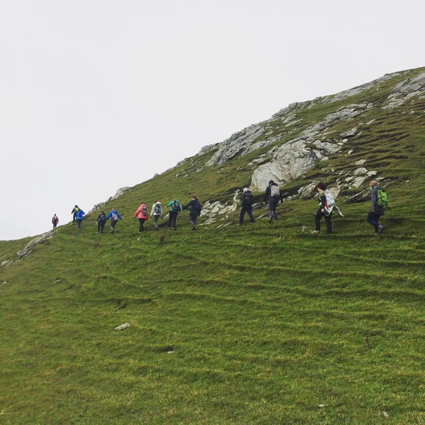 sheep-track-walking