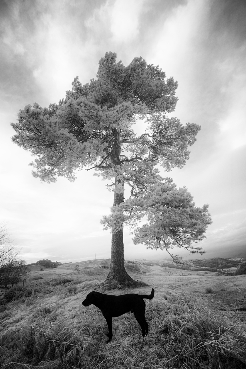 bruce-and-tree1-bw