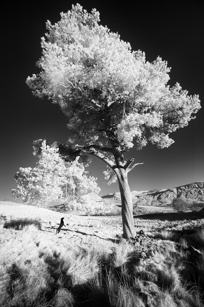 bruce-and-tree2-bw