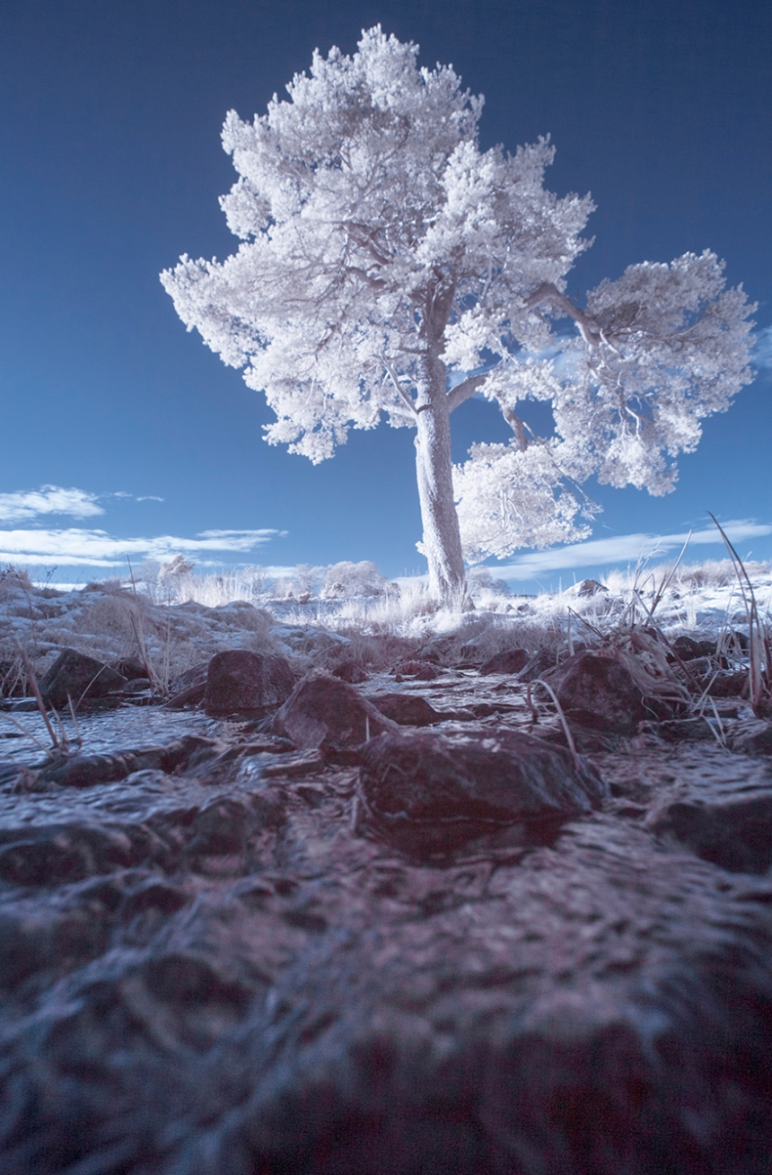 infrared-whw-tree7-copy