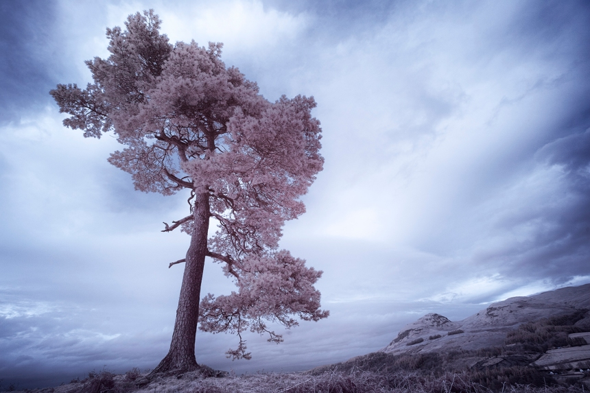 infrared-whw-trees12-copy