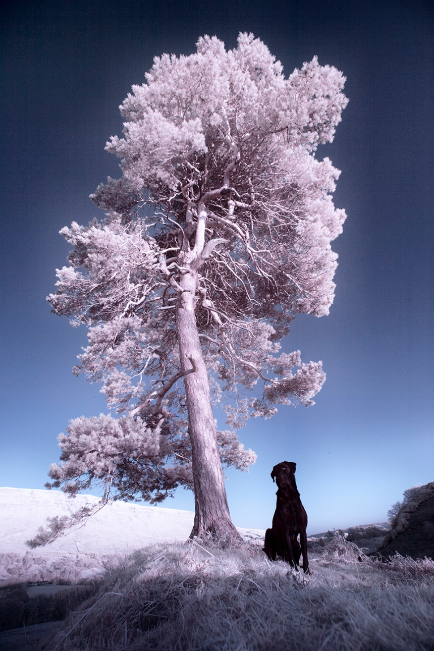 infrared-whw-trees14withbruce-copy