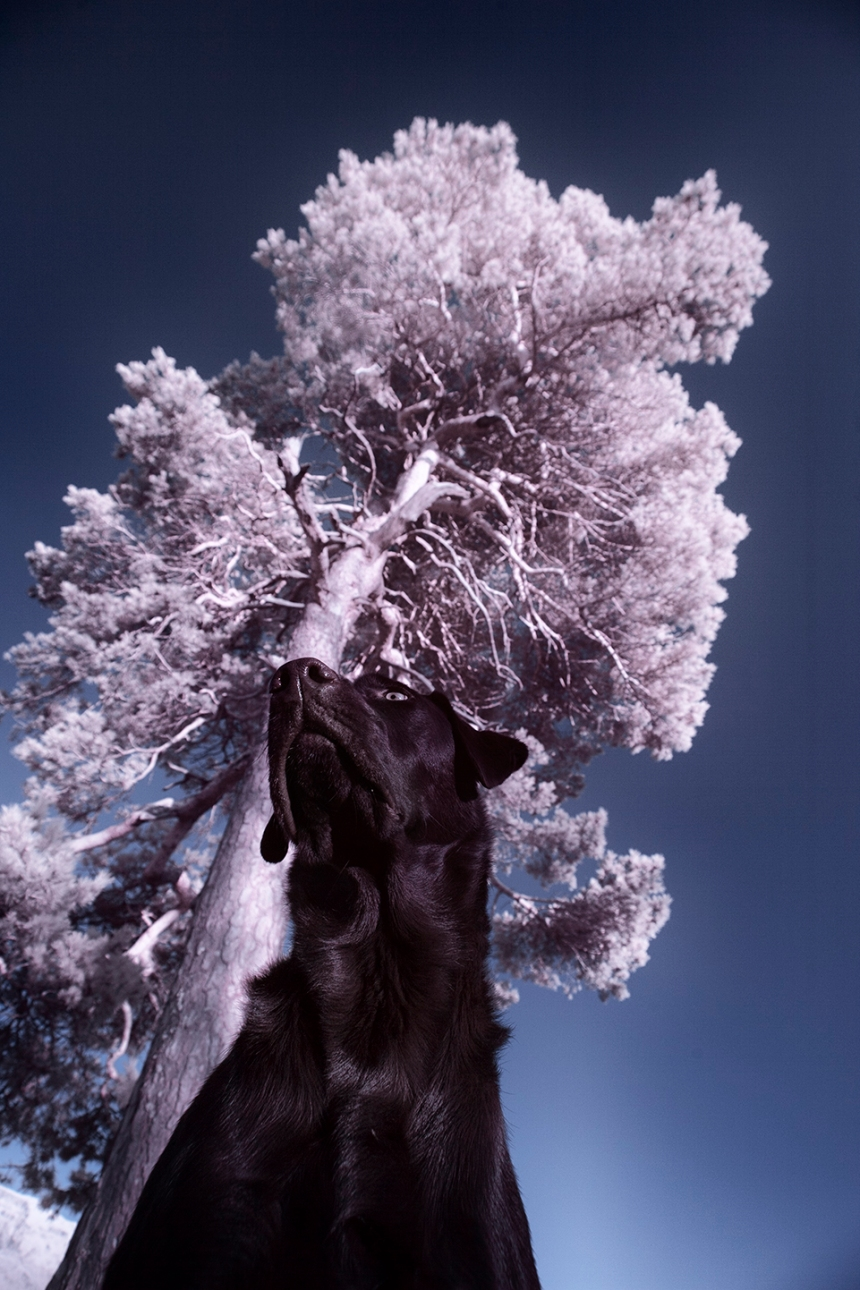 infrared-whw-trees15withbruce-copy