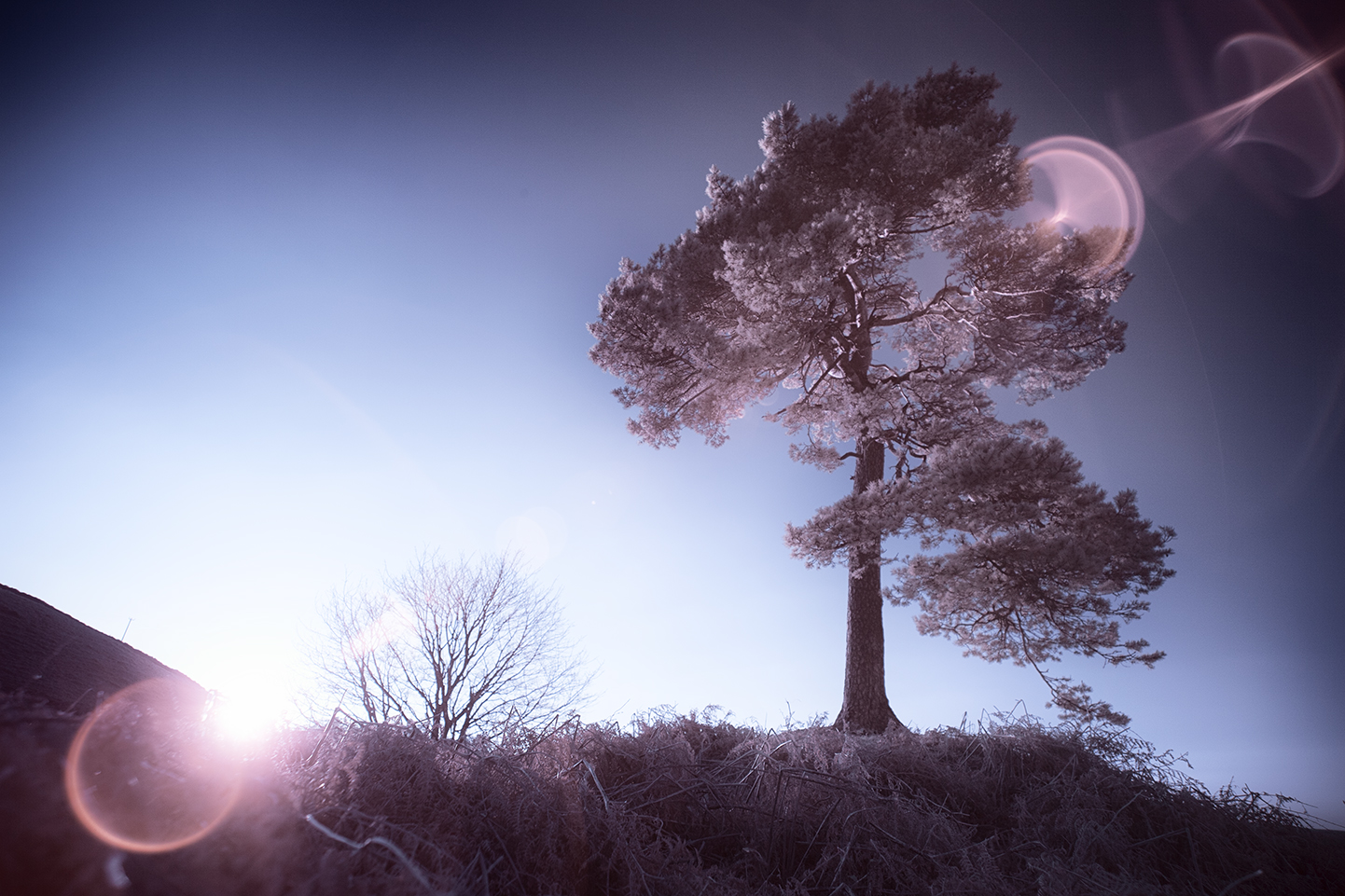 infrared-whw-trees16-copy