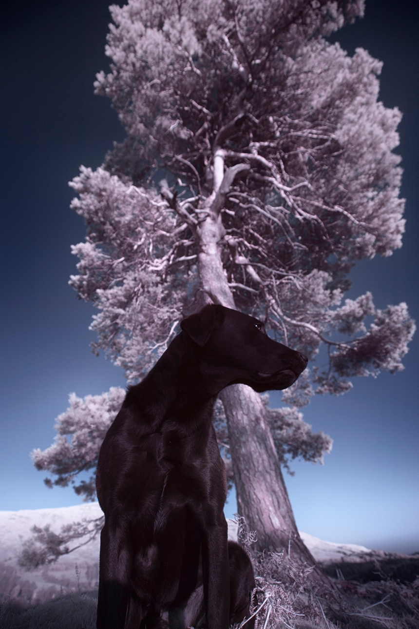 infrared-whw-trees17withbruce-copy