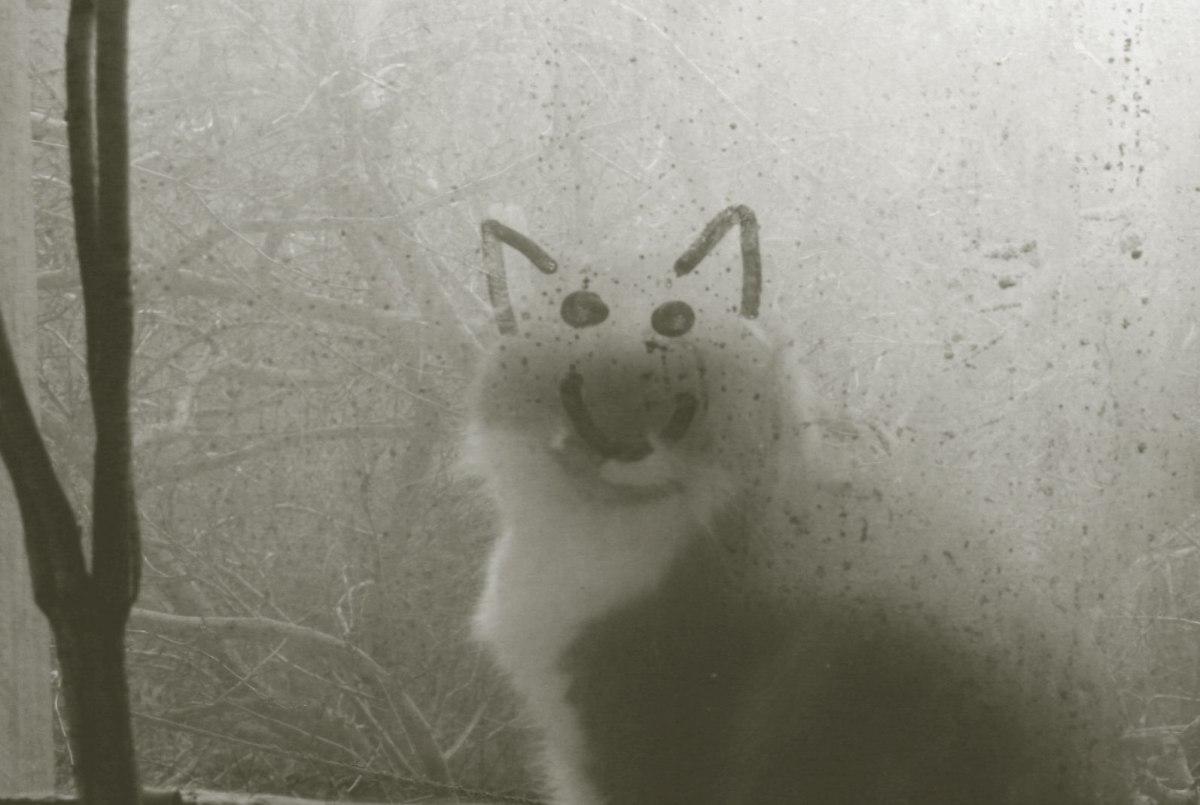 feline farewell